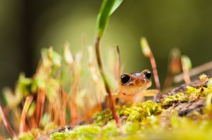 Salamander crawling